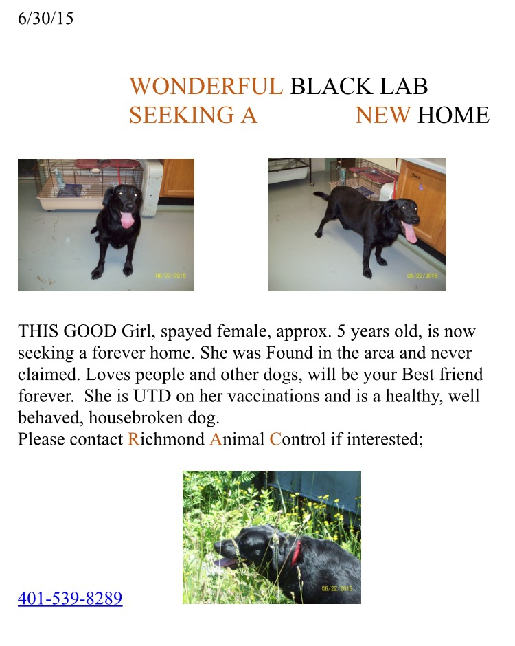 Sally black lab 063015
